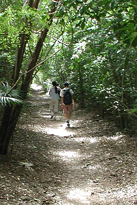 St John USVI hiking trail